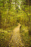 Wooden Boarding Path Way Pathway In Autumn Forest Stock Photography