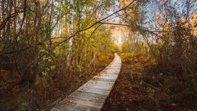 Wooden boarding path way pathway in autumn forest Stock Photos