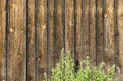 Wooden boards and green stinging nettles Royalty Free Stock Photo