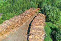 Wooden boards, log cabin trunks of conifers, top aerial view.  stock photo