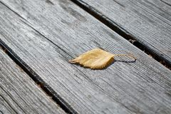 On wooden boards is one fallen autumn birch leaf. Autumn yellow leaf lies on the wooden surface. The sun is shining. Warm sunny day. Autumn, change of season stock photos