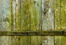 Wooden boards texture. Background with moss growth stock image