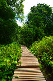 Wooden boardwalk Stock Image