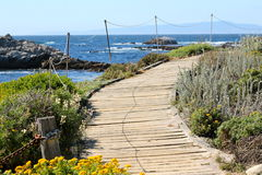 Wooden boardwalk. Along the Pacific Ocean rocky coast Stock Photos