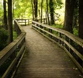 Wooden Boardwalk. Boardwalk through the trees at dusk Stock Photography