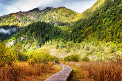 Wooden boardwalk across autumn field among wooded mountains Royalty Free Stock Images