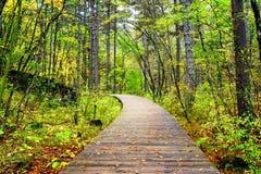 Wooden boardwalk across forest, Jiuzhaigou National Park, China Royalty Free Stock Image