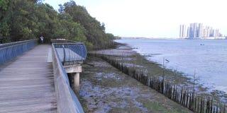Coastal mangrove boardwalk. Wooden boardwalk along the coast of Sungei Buloh wetlands reserve in Singapore stock images