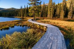 Wooden boardwalk along the lake in the mountains Royalty Free Stock Photos