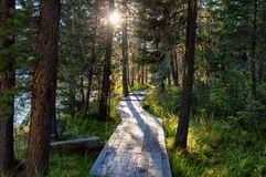 Wooden boardwalk along the lake in the mountains Stock Photography