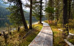 Wooden boardwalk along the lake in the mountains. Wooden boardwalk along Rakhmanovskoe lake in East Kazakhstan, Altai mountains Royalty Free Stock Photography