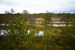 Wooden boardwalk through autumn forest and swamp - Viru raba in. Lahemaa park, Estonia Stock Photos