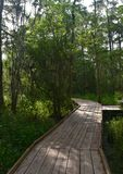 WOoden Boardwalk in the Bayou of Southern Louisiana Stock Images
