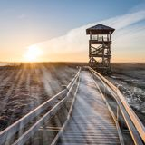 wooden boardwalk with bird watch tower in early morning - light Royalty Free Stock Image