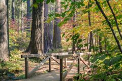 Wooden boardwalk and bridge through an evergreen forest painted in fall colors, Calaveras Big Trees State Park, California stock image