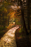 Wooden Boardwalk Cuts Through a Dark Autumn Forest Royalty Free Stock Image