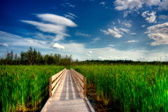 Wooden Boardwalk Cuts Through Marsh Stock Photo