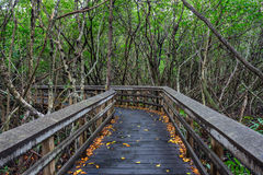 Wooden boardwalk in the Florida Everglades Stock Images
