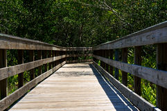 Wooden boardwalk in florida Royalty Free Stock Image