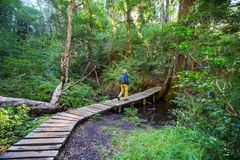 Boardwalk in the forest stock photography