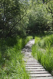 Wooden boardwalk in forest Royalty Free Stock Photography