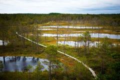 Wooden boardwalk through forest and swamp - Viru raba in Estonia. Wooden boardwalk through beautiful forest and swamp - Viru raba in Estonia Stock Image