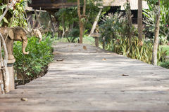 Wooden boardwalk in the garden Royalty Free Stock Image