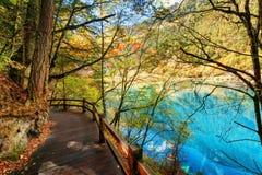 Wooden boardwalk leading along azure lake among autumn woods royalty free stock images