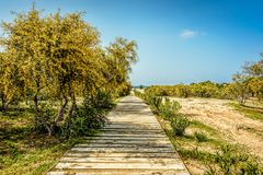 A wooden boardwalk leading to the beach between yellowish green. Foliage under blue skies with scattered clouds Stock Images