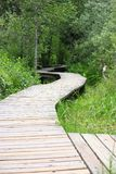 Wooden Boardwalk Through the Marsh Stock Photos
