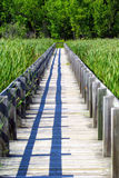 Wooden Boardwalk Through the Marshes. An old, wooden boardwalk cuts through the tall reeds of a Canadian marsh stock images
