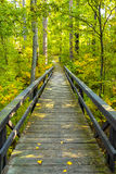 A wooden boardwalk merges into a lush green forest in the north woods. Stock Photos