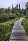 Wooden Boardwalk Next to a River - Algonquin Provincial Park. Ontario, Canada royalty free stock image