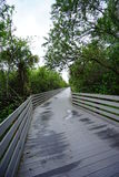 A wooden boardwalk Royalty Free Stock Photos