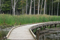 Wooden Boardwalk over Pond Stock Photography