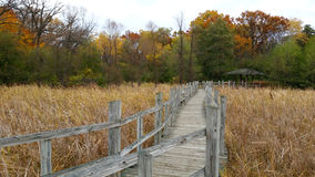 Wooden boardwalk over swamp in colorful autumn Royalty Free Stock Photo