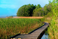 Boardwalk path in swamp Royalty Free Stock Images