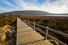 Wooden boardwalk at Pine Lake along Tasmanian ancient trees, con. Easy level track, Wooden boardwalk at Pine Lake along Tasmanian's rarest ancient trees stock image