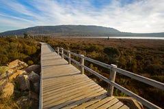 Wooden boardwalk at Pine Lake along Tasmanian ancient trees, con Stock Image