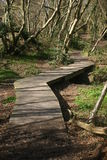 Wooden boardwalk in woodland Stock Images