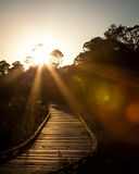 Wooden Boardwalk with Setting Sun Through Trees and Sun Flare Royalty Free Stock Photo