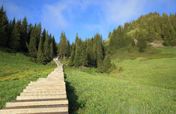 Wooden boardwalk staircase hiking trail lead to forest mountain peak Royalty Free Stock Photo