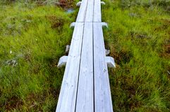 wooden boardwalk in bog Stock Photography
