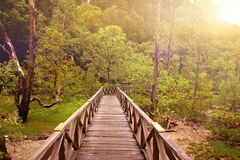 Wooden boardwalk in tropical swampland heading into a forest of Sarawak Stock Photos