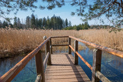 Wooden boardwalk with view to blue fount in the swamp. Moor lake osterseen, bavaria Royalty Free Stock Images