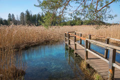 Wooden boardwalk with view to blue fount in the swamp. Moor lake osterseen, bavarian landscape Stock Image