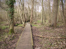 Boardwalk in woodland Royalty Free Stock Photography