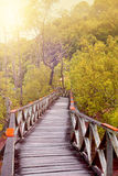 Wooden boardwalWooden boardwalk in tropical swampland heading into a forest of Sarawak Stock Photo