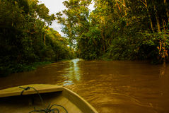 Wooden boat floating on the river Kinabatangan and dense tropical forest. Sabah, Borneo, Malaysia. Wooden boat floating on the river Kinabatangan and dense Stock Photos