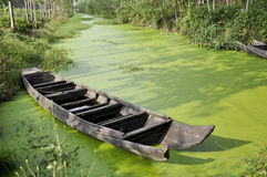 Wooden boat on the water. Ancient asia autumn beautiful boat china color colorful connection craft dingy drift environment era fall floating grass green royalty free stock photo
